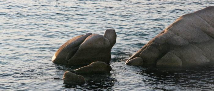 roccia della tartaruga di cala girgolu