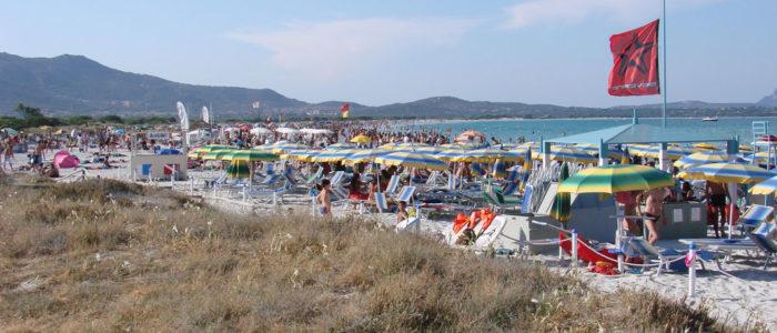 spiaggia la cinta di san teodoro e gigli di mare